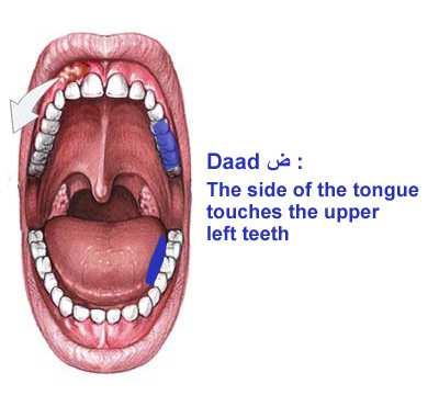 Front_Tongue_Daad